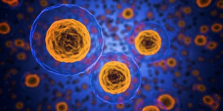 יתרונות חלב קינואה ומתכון: תאי גוף