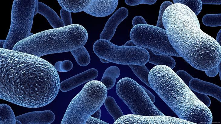 דברים שכדאי לדעת על פרוביוטיקה: בקטריות