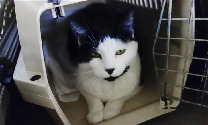 חתול בתוך כלוב