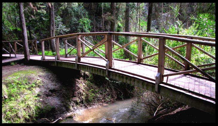 גשר עץ באזור נחל שופט שבעמק השלום