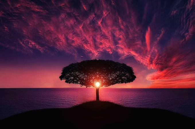 עץ בודד ומאחוריו ים ושקיעה