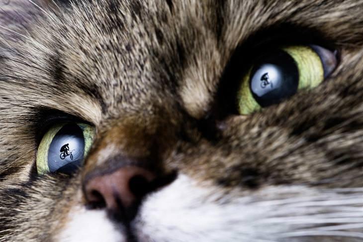 תמונות אקסטרים: רוכב אופניים משתקף באישוני חתול