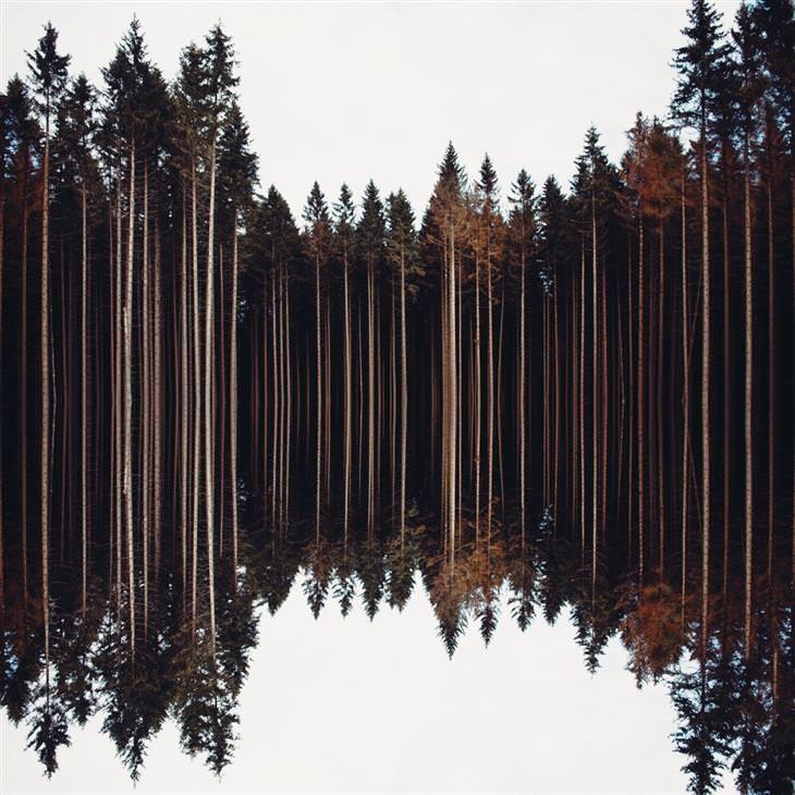"""תמונות טבע"""" אגם במדינת סקסוניה-אנהלט שבגרמניה"""
