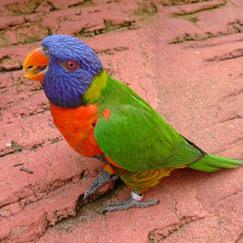 בחרו ציפור וגלו פרטים על אישיותכם: תוכי