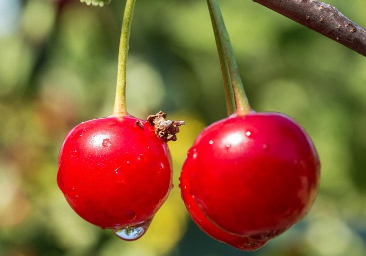 שיטות טבעיות לטיפול בכאב שרירים: דובדבנים תלויים על ענף