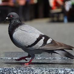 בחרו ציפור וגלו פרטים על אישיותכם: יונה