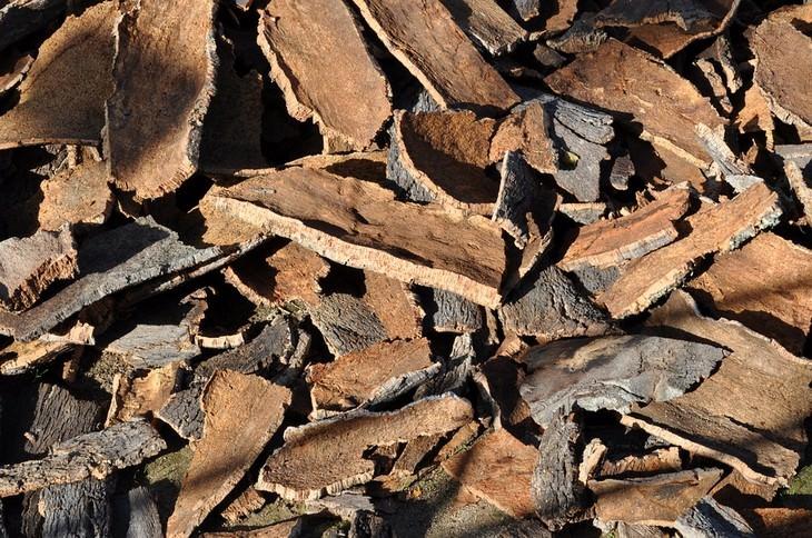 מניעת הזעת יתר בצורה טבעית: קליפות עץ אלון