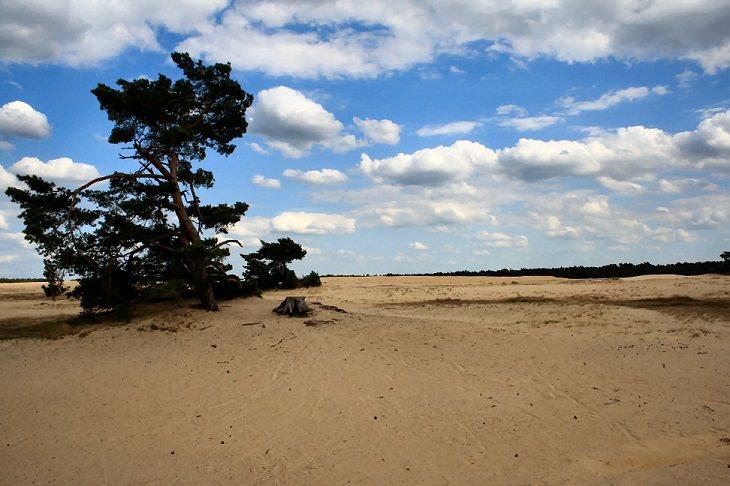 שמורות טבע ופארקים לאומיים בהולנד: הפארק הלאומי הוחה פלואה