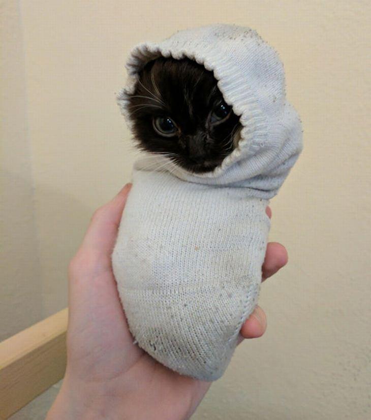 חיות חמודות שיעשו לכם את היום: חתלתול בתוך גרב