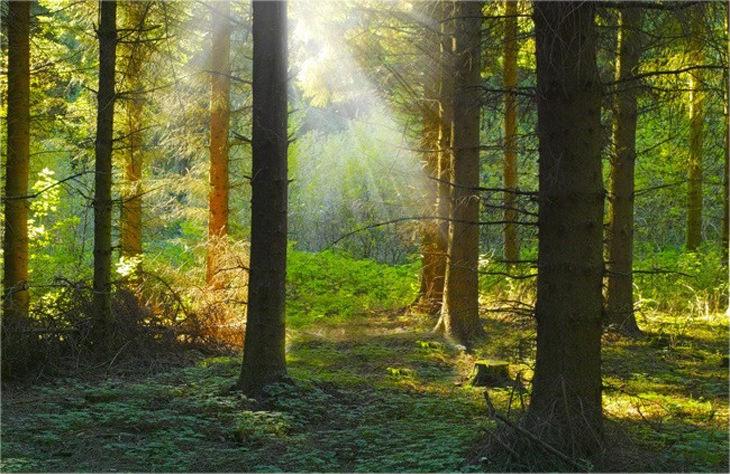 איך חיות רואות את העולם: יער