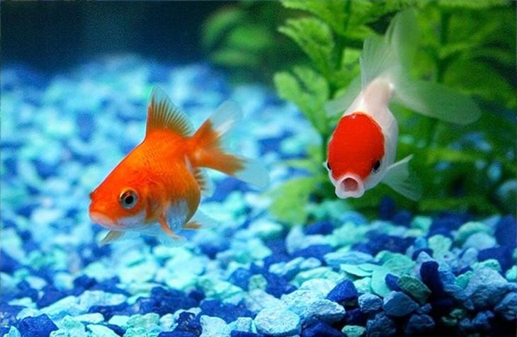 איך חיות רואות את העולם: דגים באקווריום