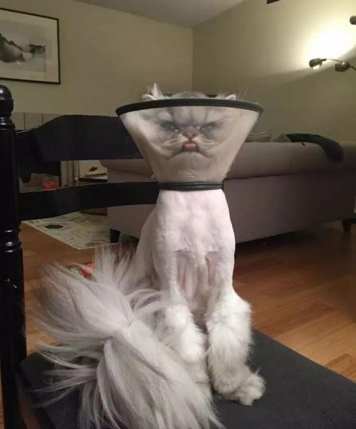 תמונות מצחיקות של חתולים: חתול עם חרוט פלסטיק סביב ראשו