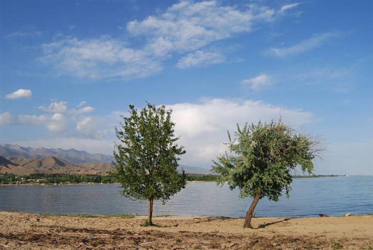 מסע בתמונות בדרך המשי: שתי עצים מול אגם איסיק קול בקירגיזסטן