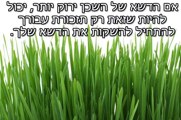 משפטים להתמודדות עם חוסר שליטה:  אם הדשא של השכן ירוק יותר, יכול להיות שזאת רק תזכורת עבורך להתחיל להשקות את הדשא שלך.