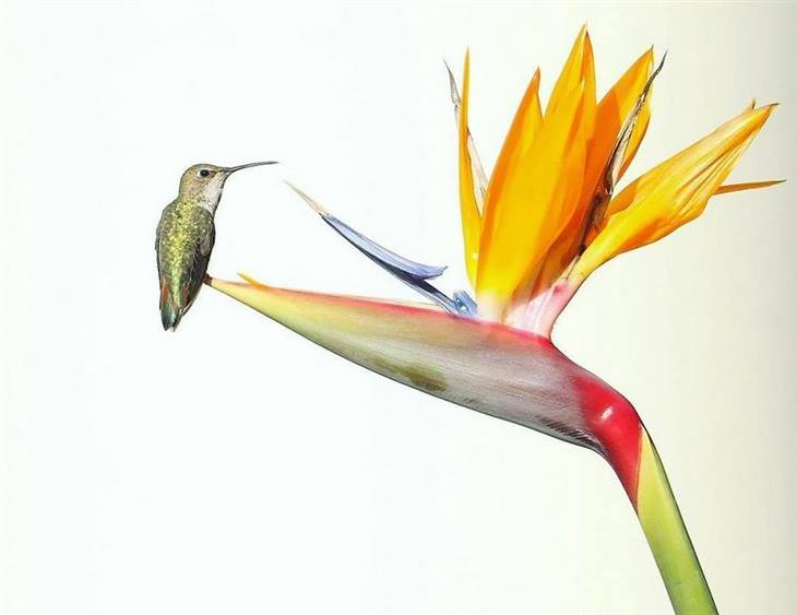 תמונות טבע של רוברט ארווין: ציפור על פרח