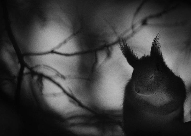 תמונות טבע: סנאי אדום בשוודיה