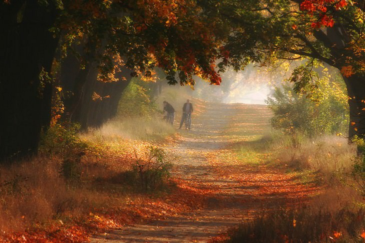 סתיו בפולין: שני אנשים הולכים בשדרת עצים צבעונית