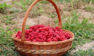 מבחן אישיות: פירות יער בסלסלה