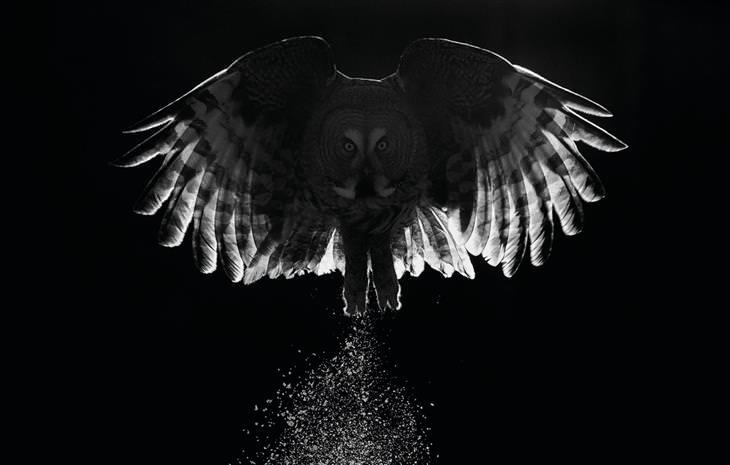תמונות מתחרות צילום הציפורים של הקרן הבריטית לצפרות: ינשוף ממריא לאוויר כשסביבו חשכה מוחלטת