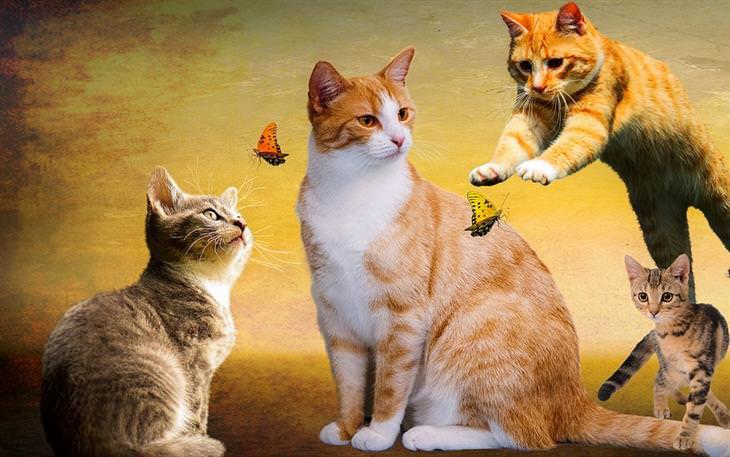 סוגי אישיות של חתולים: ארבעה חתולים ופרפרים ביניהם, כשחלקם מתעניינים בפרפרים וחלק לא