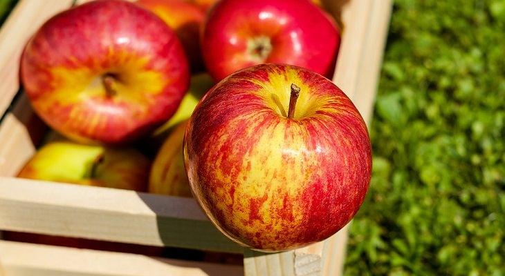 הרגלים מומלצים ובריאים: תפוחי עץ