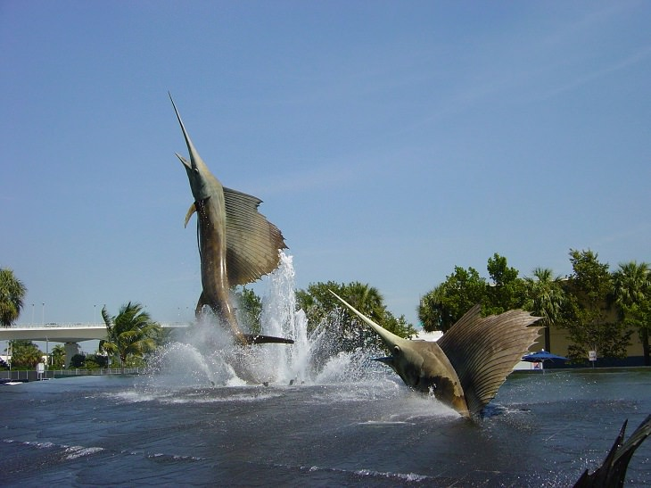 בעלי החיים המהירים בעולם: דגי מפרשן