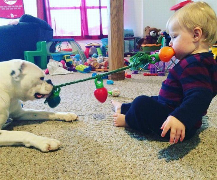 ילדים וחיות מחמד: תינוק וכלב משחקים עם צעצוע של משיכה בחבל