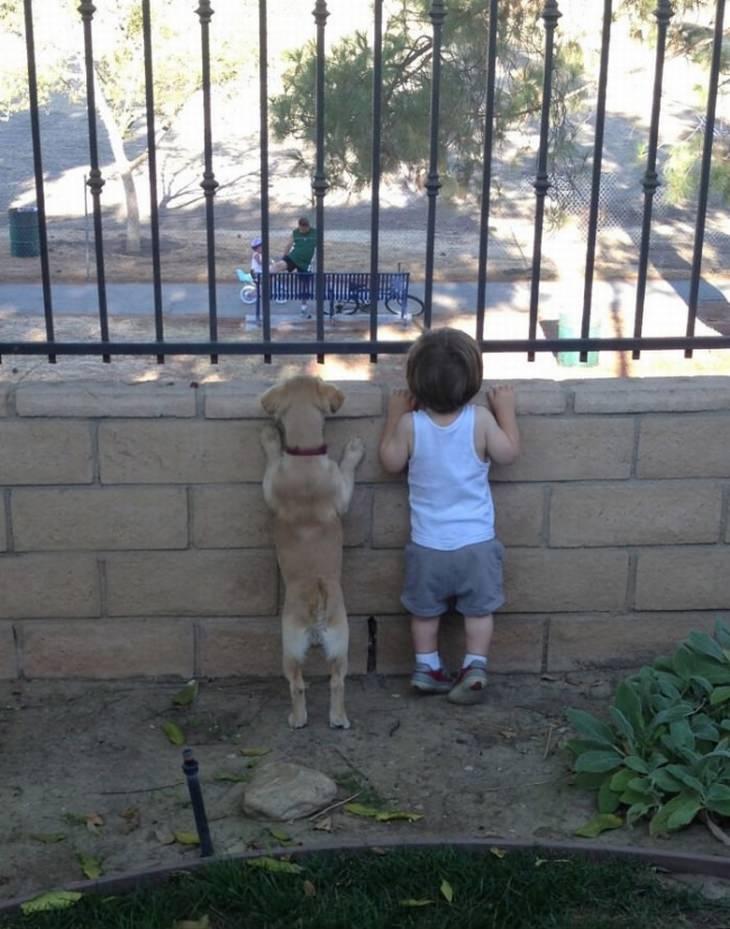 ילדים וחיות מחמד: ילד וכלב קטנים מנסים להציץ מעבר לגדר