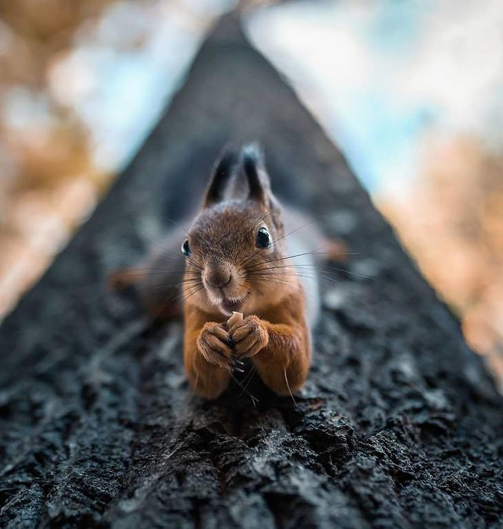 צילומי חיות ביער פיני מושלג: סנאי