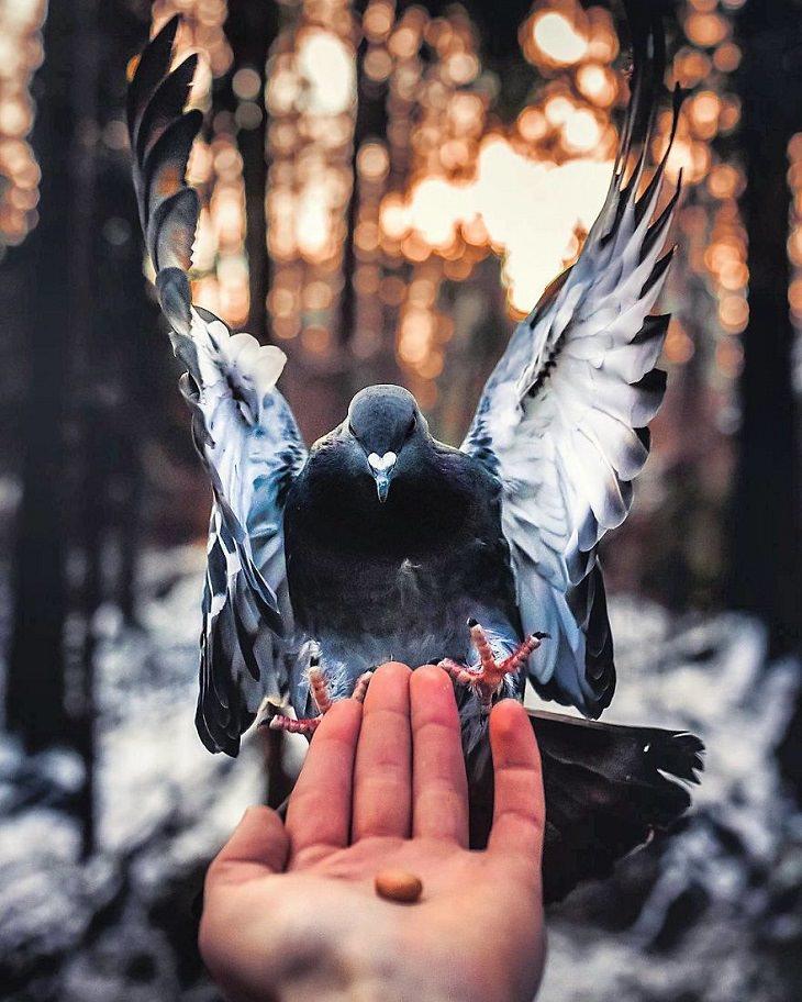 צילומי חיות ביער פיני מושלג: ציפור