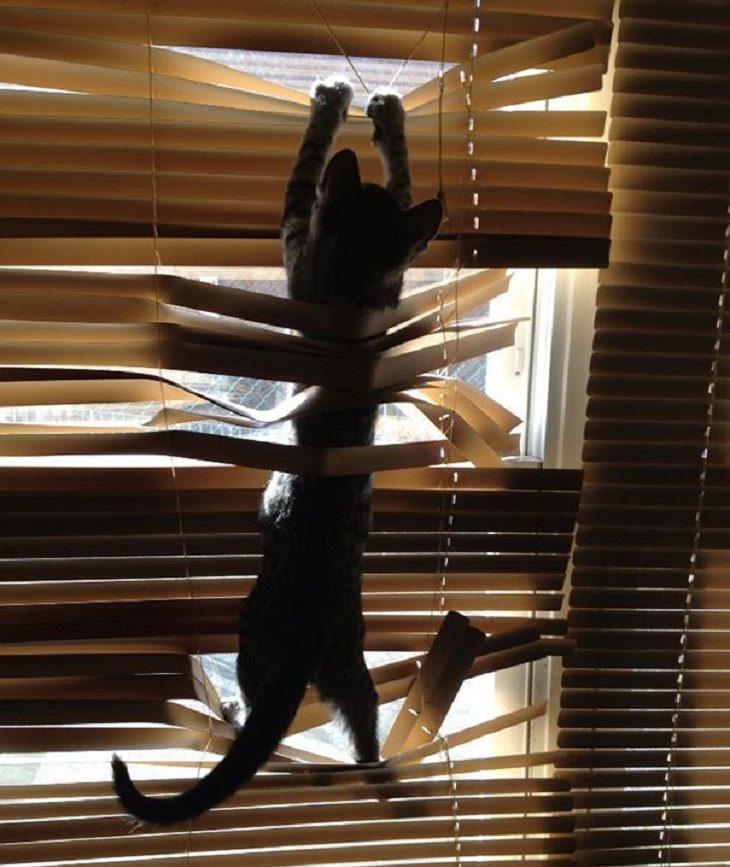 חיות מצחיקות: חתול מטפס על תריס ונציאני