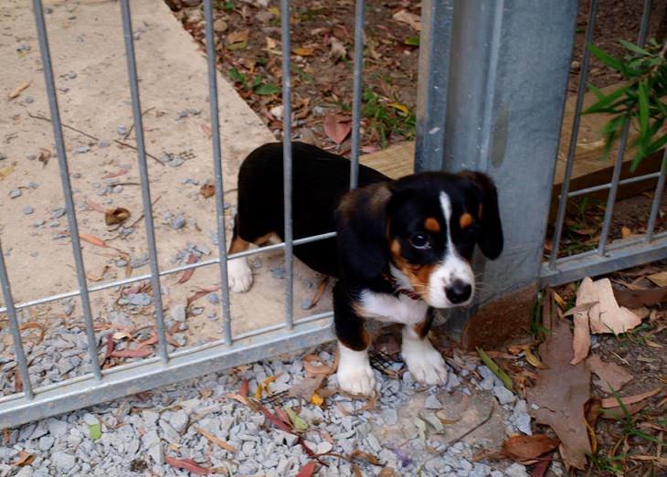 חיות מצחיקות: כלב תקוע בגדר