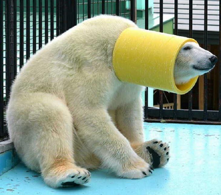 חיות מצחיקות: דב עם גליל עם הראש