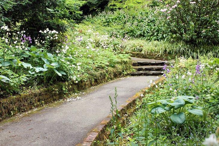 שיר על הברכה שבשכחה: שביל עם מדרגות, מוקף בצמחים