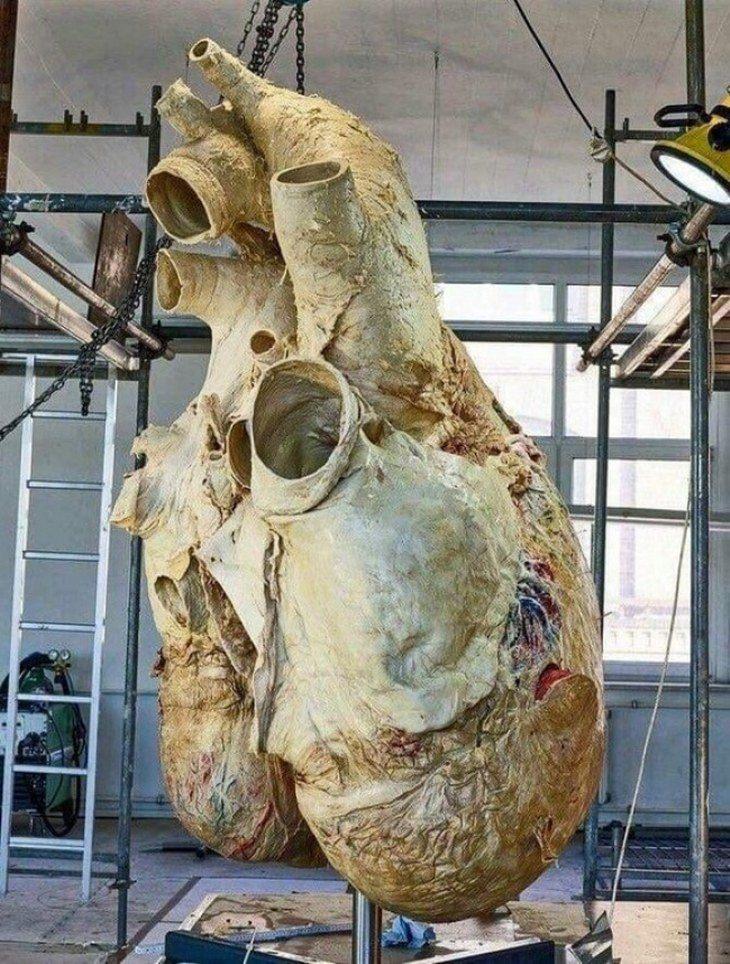 תמונות נדירות: לב של לוויתן