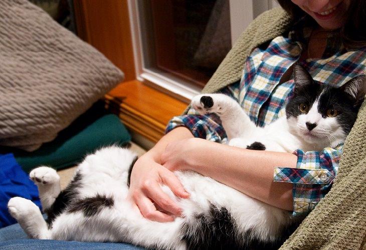 מחקר על חתולים: חתול שוכב על אישה