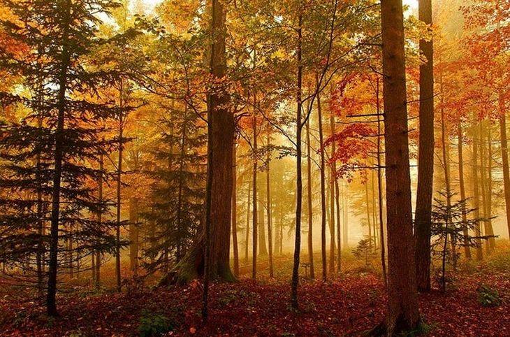 עונת הסתיו במקומות שונים בעולם: מגלינגן, קנטון ברן, שוויץ