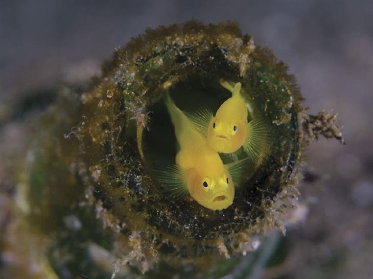 15 התמונות היפות ביותר מתחת למים: שני דגים קברנוניים מציצים מתוך צוואר בקבוק שהפך לביתם