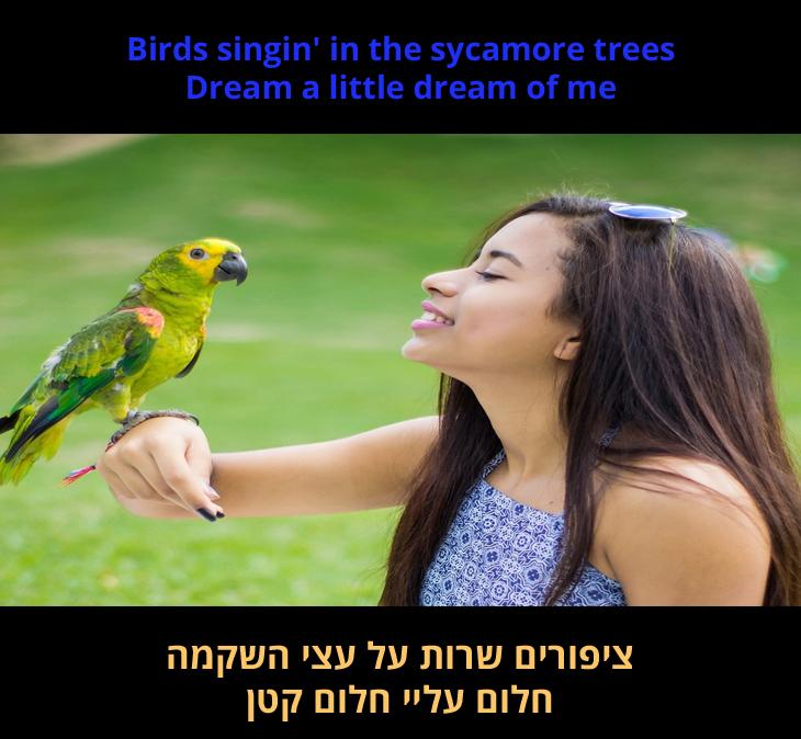 """מצגת שיר """"חלום עליי חלום קטן"""": """"ציפורים שרות על עצי השקמה / חלום עליי חלום קטן"""""""