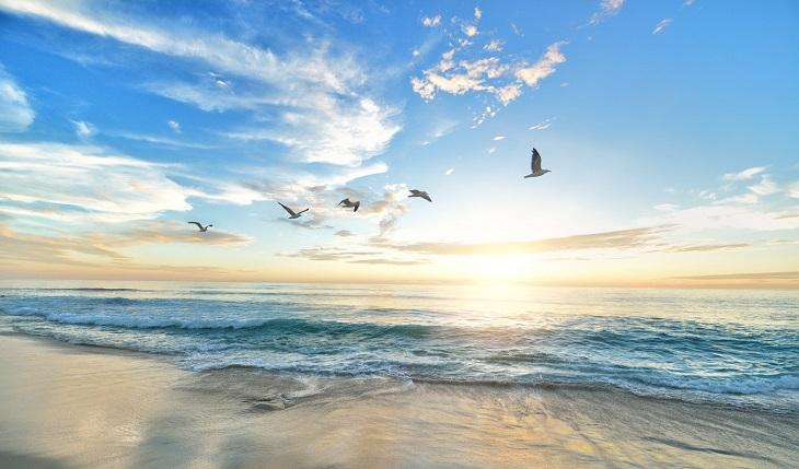 להתחיל מבראשית: ציפורים עפות מעל הים