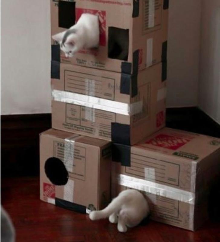 תמונות ברגע הנכון: חתול ארוך במיוחד במבנה של קופסות מקרטון