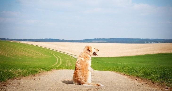 סימנים שהכלב שלכם חכם: כלב יושב באמצע דרך עפר