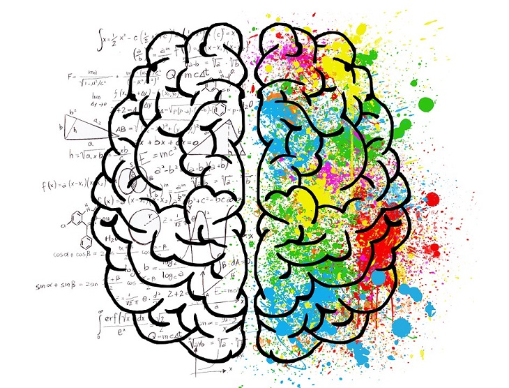 10 מיתוסים על המוח האנושי שהתבררו כלא נכונים: ציור של מוח כאשר החלק הימני צבעוני והשמאלי לא