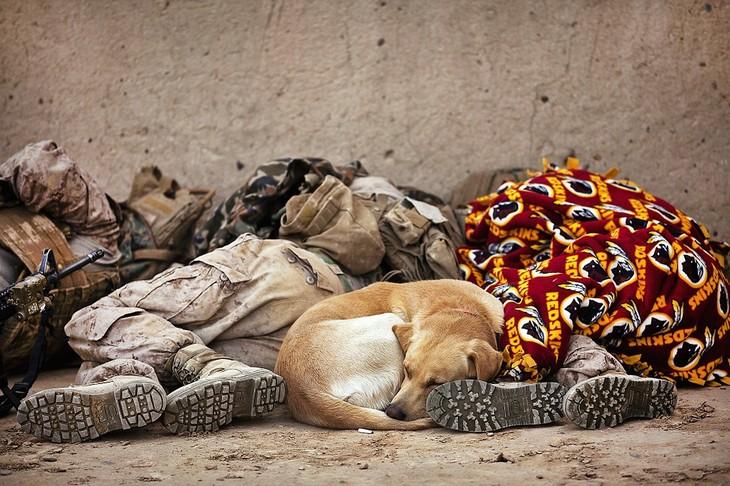"""שיטה צבאית להירדמות מהירה: חיילי צבא ארה""""ב ישנים ברחוב וביניהם כלב ישן"""