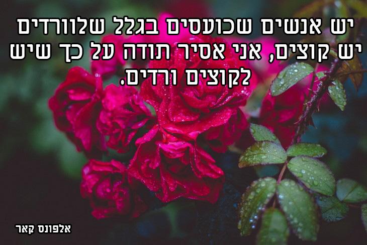 ציטוטים חכמים: יש אנשים שכועסים בגלל שלוורדים יש קוצים, אני אסיר תודה על כך שיש לקוצים ורדים. אלפונס קאר