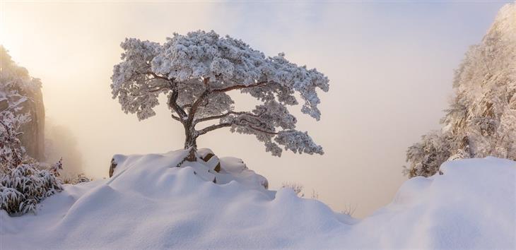 """צילומים פנורמיים מהתחרות הצילום הבינלאומית:""""טקס מלכותי"""" של נתניאל מרז – הר דדונסן, דרום קוריאה"""