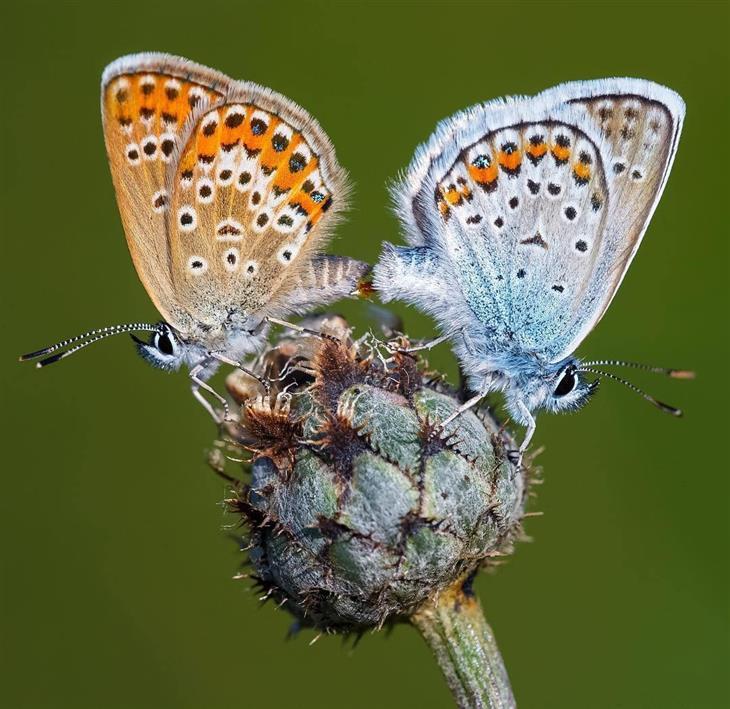 פרפרים יפים: