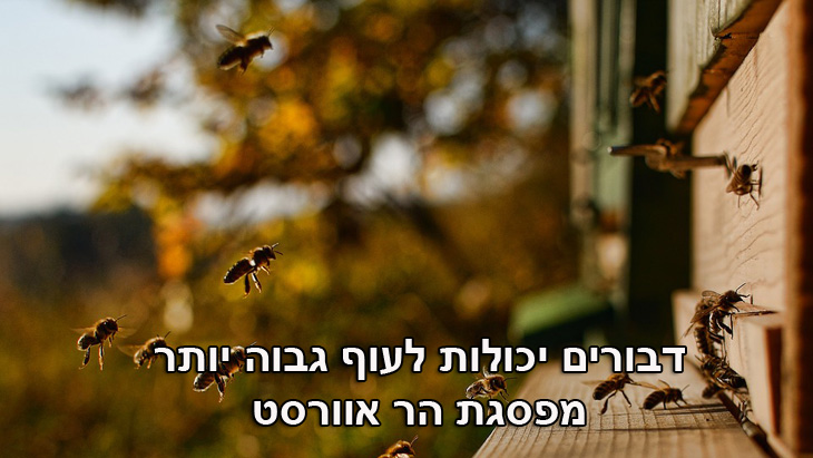 מצגת עובדות: דבורים יכולות לעוף גבוה יותר מפסגת הר אוורסט