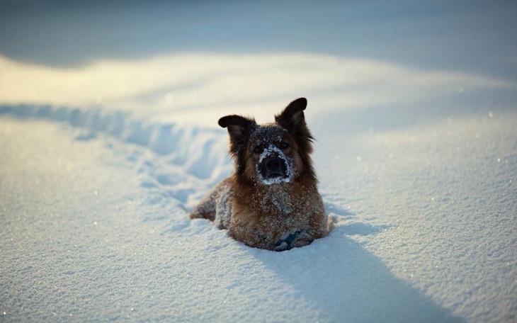 חיות חמודות בחורף: כלבה חוצבת נתיב בשלג עמוק