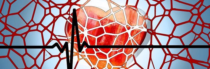 יתרונות שורש הליקוריץ לחולי סוכרת וטרשת עורקים: איור של לב ומסביבו רשת עורקים וקו מדידת דופק